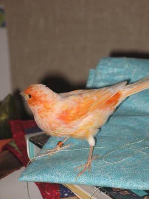 Birdie_4